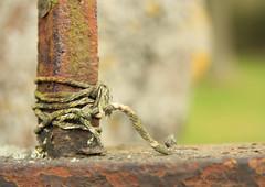 tied (Bridge B) Tags: macro rust tie string
