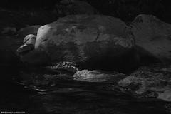 1073 (.danilo almeida) Tags: gua canon rj natureza pb trips montanha texturas pedras 2014 maromba rochas 105mm sombraeluz riopreto 5dmk2