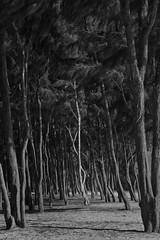 Waimanalo Bay pt.IV (ShannonElisabeth) Tags: ocean morning trees summer blackandwhite white black tree green beach nature monochrome june digital forest sunrise landscape island photography hawaii bay coast blackwhite sand nikon focus raw tour shadows pacific bright oahu tripod monochromatic pacificocean d200 dslr nikondigital waimanalo shawdow mothernature brighter hawaiianislands rawimage nikonraw nikond200 waimanalobeach waimanalobay shootraw oahuphotographytours