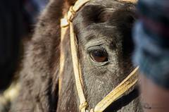 De frente (Picardo2009) Tags: portrait horses horse face uruguay caballos countryside retrato country cara campo colonia sight mirada campaa juanlacaze pruebaderiendas pruebadedestreza
