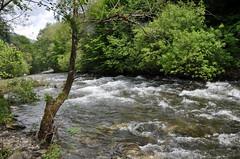 Mountain river, Rila, Bulgaria (stevelamb007) Tags: sofia bulgaria balkans