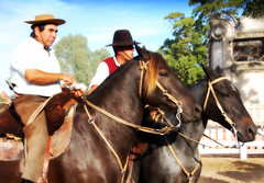 Amistad (Eduardo Amorim) Tags: horses horse southamerica caballo uruguay cheval caballos cavalos prado montevideo pferde cavalli cavallo cavalo gauchos pferd hest hevonen chevaux gaucho 馬 américadosul montevidéu häst uruguai gaúcho 말 amériquedusud лошадь gaúchos 马 sudamérica suramérica américadelsur סוס südamerika حصان pilchas άλογο pilchasgauchas americadelsud ม้า americameridionale pilchasgaúchas semanacriolla semanacriolladelprado eduardoamorim semanacriolladelprado2011 ঘোড়া