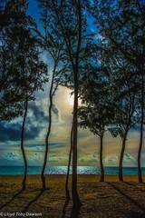 Sunrise beach trees (Photography by LTD) Tags: blue trees sunset beach yellow sunrise hawaii oahu