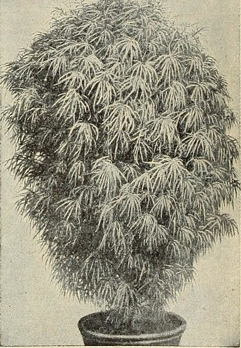 "Image from page 9 of ""Seeds, bulbs, plants"" (1908)"