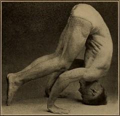 Anglų lietuvių žodynas. Žodis triceps reiškia n anat. trigalvis raumuo, tricepsas lietuviškai.