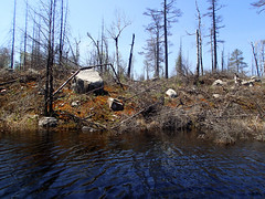 Fire-burned southern shoreline of Lake One in the BWCA