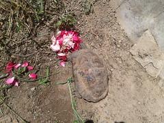 Buongiorno Tarta! (zambi74) Tags: animals turtles tartaruga animale tarta rettile beniamino