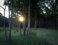 IMG_3788.jpg (nixpix88) Tags: trees beach strand deutschland born balticsea bäume ostsee darss urwald mecklenburgvorpommern nationalparkvorpommerscheboddenlandschaft fischlanddars maturstrand