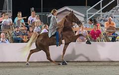 Tennessee Walking Horse Celebration - Aug 26 (Purple Panda13) Tags: horse nikon tennessee celebration shelbyville equine d800 horseshows tennesseewalkinghorse nikond800