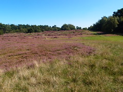 20140830 006 (Walter_71) Tags: nature dune heath noordhollands duinreservaat