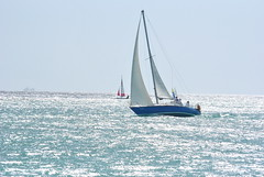 DSC_5984 (eric15) Tags: beach race cat surf sailing wind offshore competition surfing racing aruba international catamaran sail windsurfing regatta optimist sunfish 2014