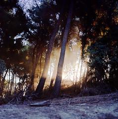 Beyond the pines (Alex_Iacob) Tags: light sunset 120 6x6 film sunshine pine rollei rolleiflex zeiss forest mediumformat shine kodak availablelight magic greece pines grecia mystical mf sunrays expired griechenland portra skiathos rolleiflex28f expiredfilm 160nc kodak160nc mittelformat zerophotoshop frankeheidecke epsonv750pro carlzeissplanar8028 fullymechanicalcameras forgetaboutdigital gossenstarlite2 wwwalexiacobcom alexiacob