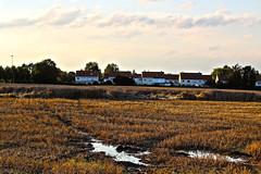 Neighbourhood (maximedemiere) Tags: houses brown field mud ground terre neighbourhood champ voisinage boue alentour