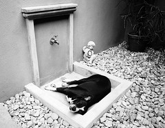 India. Very hot afternoon.. (lalie sorbet) Tags: summer blackandwhite dog chien india hot monochrome noiretblanc t chaud inde chaleur laliesorbet