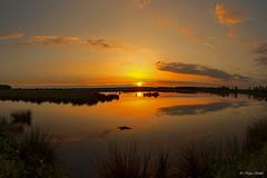 "Sunset in the Moor - 31051303 (Klaus Kehrls) Tags: sonnenuntergang natur moor seen landschaft schleswigholstein "" himmelmoor worldwidelandscapes"" ""nature'selegantshots"" thebestofmimamorsgroups ""panoramafotografico"" ""flickr'sportal"" ""theoriginalgoldseal"" ""topshots"" ""napture'splus"""