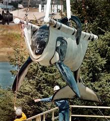 keiko (kanduv) Tags: usa animals tiere newport orca keiko