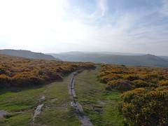 P1010357 (jrcollman) Tags: plants places devon dartmoor houndtor callunavulgaris ulexgallii cplant haytortohoundtor graniterailwaytrack