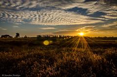 Sunset Regte Heide