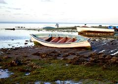 Fishing fleet at low tide (TiLacaz) Tags: boats wooden seascape rockpools shoreline lowtide sealife seaweed algue nature fishing fisherman horizon calm sky island rodrigues geology craft