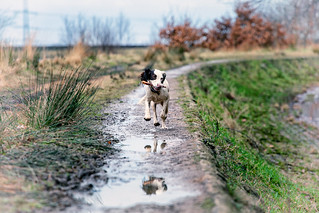 Run Rupert Run!