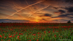 Poppy Sunset (AGB Photography) Tags: sunset landscape nikon warm colours somerset fields 2014 poppys d7000 agbphotography