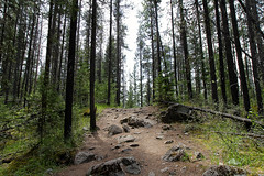 Another Walk in the Woods (matthewdhanson902) Tags: jasper path hike alberta