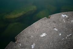 (wickedmartini) Tags: park longexposure light summer lake newyork ontario color detail reflection green bird beach nature water landscape photography pier nikon rocks availablelight greatlakes poop algae lakeontario hamlinbeach nd110 1835mmf3545g michaeldavignon nikond610