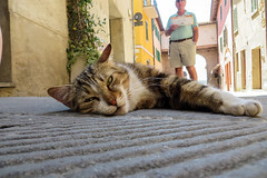 Cat in Castiglione del Lago, Italy (Yack_Attack) Tags: trip sunset vacation italy food holiday vatican rome castle museum architecture clouds photography countryside vegan basilica lakes pantheon churches colosseum perugia preggio