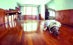 Tuckered out. (severalsnakes) Tags: dog floor pentax sleep fisheye tired manual 835 k30 rokinon