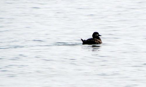 01 Duck Harkers Island NC 9761