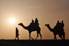 Always Thrilling (The Spirit of the World ( On and Off)) Tags: light sun india sunrise desert dunes silhouettes caravan camels sanddunes rajasthan desertlandscape camelriders thardesert thesilkroad desertscene ruby5 rememberthatmomentlevel1 rememberthatmomentlevel2 rememberthatmomentlevel3
