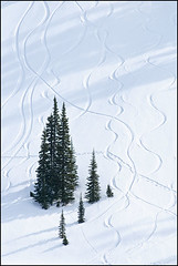 Winter Tracks at Mount Rainier (Greg Vaughn) Tags: travel trees winter usa white snow west nature monochrome lines vertical pine america landscape snowshoe outdoors design washington graphic scenic tracks nobody monochromatic pines american mountrainiernationalpark western snowboard pacificnorthwest northwestern pure conifers crosscountryskiing paradisevalley purity pristine gregvaughn 0902095