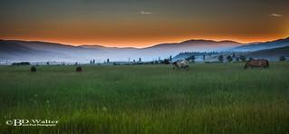 Merritt Sunrise Horses