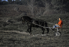 C2192-A solas por el camino (Eduardo Arias Rábanos) Tags: horse cutout caballo lumix panasonic vegetation carro soledad cart g3 candids lonelyness vegetación doniños robados desaturación desaturaciónparcial eduardoarias eduardoariasrábanos