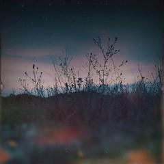 Groggy (BLACK EYED SUZY) Tags: twilight summertime wildflowers nightfall iphone afterlight hipstamatic oggl mextures