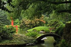 Rain In the Japanese Garden (HorsePunchKid) Tags: brooklynbotanicgarden japanesehillandpondgarden jhpseries