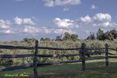 New England Apple Orchard (Michael Bartoshevich) Tags: apple orchard apples hollis hollisnh applenew hampshirebarnred barnapple