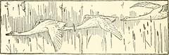 Anglų lietuvių žodynas. Žodis water-vole reiškia n zool. vandeninė žiurkė lietuviškai.