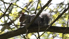 (orbit9000) Tags: trees nature woods woodlands squirrels natureskingdom