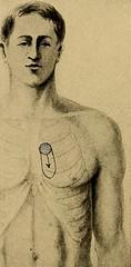 Anglų lietuvių žodynas. Žodis cardiorespiratory reiškia kardiorespiratorius lietuviškai.