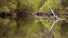 Warren National Park (kirtapatrik) Tags: australien warrennationalpark