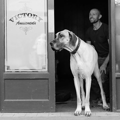Big Dog (D.J. De La Vega) Tags: street dog newcastle nikon df candid great 85mm dane f18