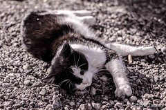 Street Cat Portrait (meepeachii) Tags: cute cat streetphotography