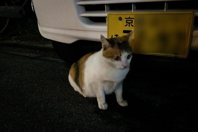 Today's Cat@2014-08-23