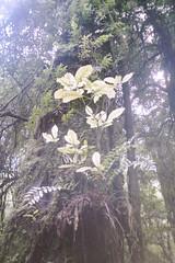Glimmer. (Ure.Eljay) Tags: light newzealand green film leaves analog forest 35mm bush flora mju native olympus jungle nz ferns glimmer