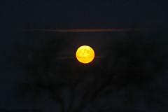 IMG_0976v (berserker170) Tags: luna moon 7d eos sigma 150500 noche night flickrexploreme