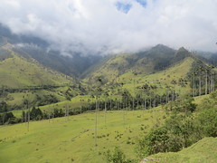 Hike Valle de Cocora