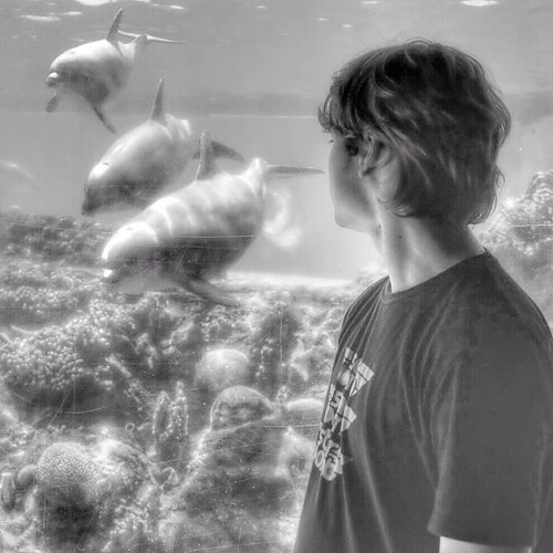 Dad, what's the purpose of the porpoise? #dolphin #porpoise #puns #fatherandson #seaworld #blackandwhite #b&w #iphone