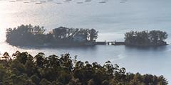 Isla de San Simn (dfvergara) Tags: espaa azul contraluz mar agua arboles galicia ensenada isla ria vigo sansimon rande bateas redondela ensenadaderande