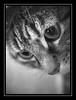 Mickie (Fotogravirus) Tags: cat fujian mickie fotogravirus cctvlens fujian25mm